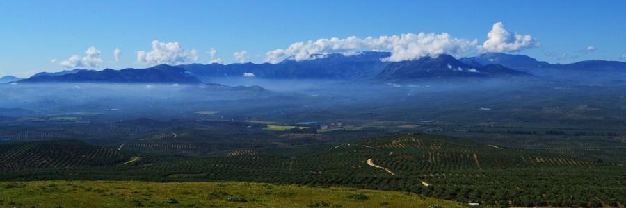 De los campos de olivos de Baeza, Ciudad declarada Patrimonio de la Humanidad.